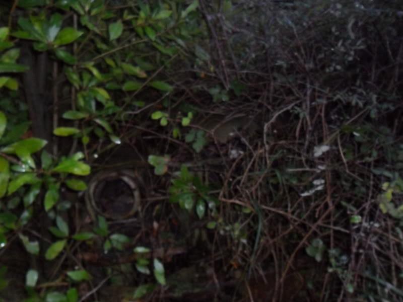 Coches abandonados en Podes(Avilés) - Página 2 SAM_2693