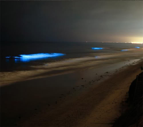 البحيرة المضيئة مناظر خلابه  Glowing-waves-bioluminescent-ocean-life-explained-california_50148_600x450-580x435