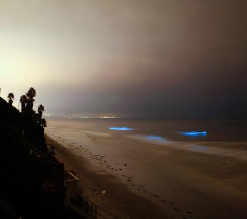 البحيرة المضيئة مناظر خلابه  Glowing-waves-bioluminescent-ocean-life-explained-leucadia-california_50150_600x450-580x435