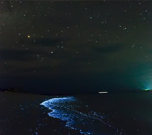 البحيرة المضيئة مناظر خلابه  Glowing-waves-bioluminescent-ocean-life-explained-maldives_50147_600x450