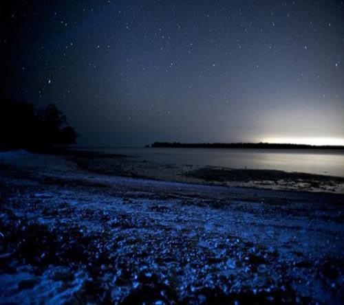 البحيرة المضيئة مناظر خلابه  Glowing-waves-bioluminescent-ocean-life-explained-white-horse-key_50163_600x450-580x385