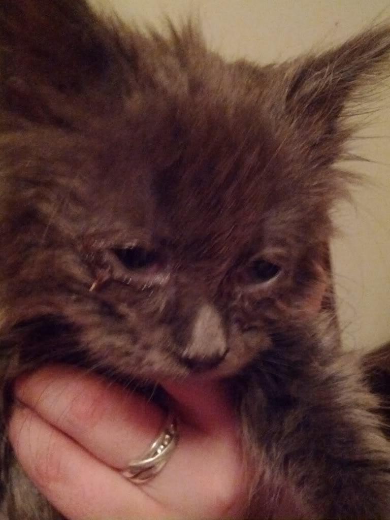Mira - The Rescue Kitten IMG_20120904_000647