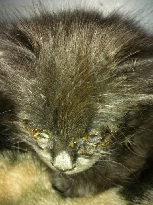 Mira - The Rescue Kitten IMG_4007