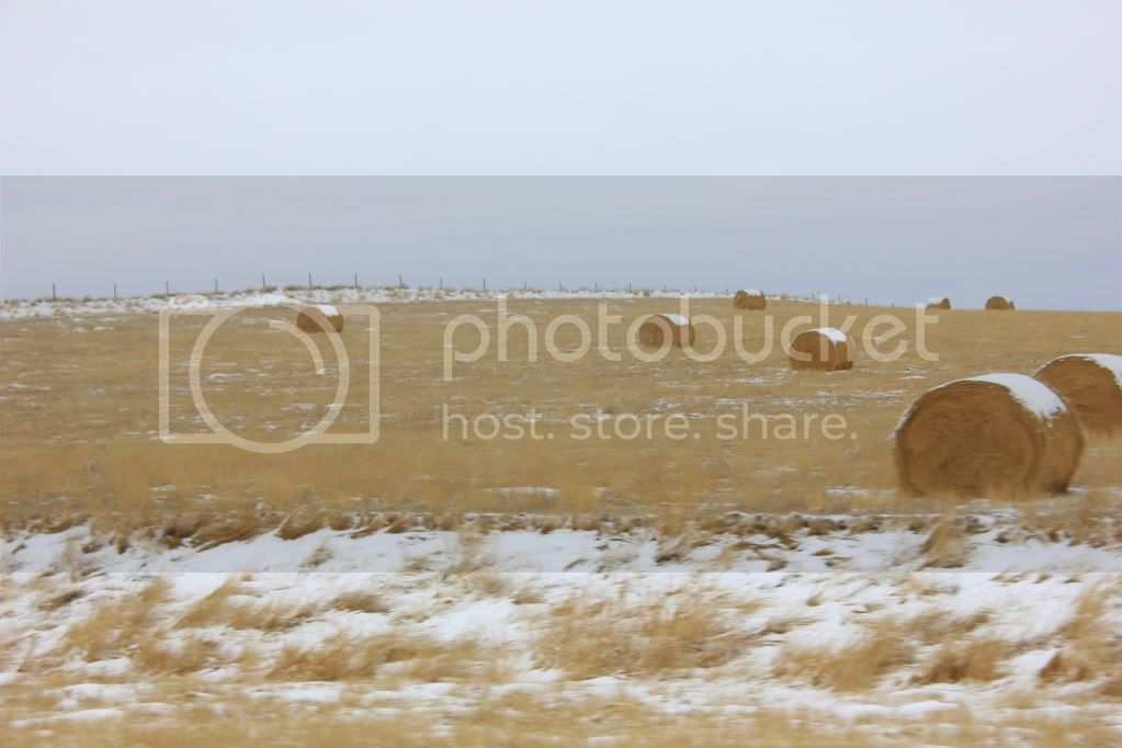 For those of you who have never been to the Canadian Prairies.... IMG_2053