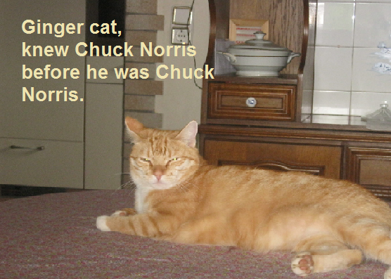 Funny Pictures - Page 2 Gingercatknewchucknorris