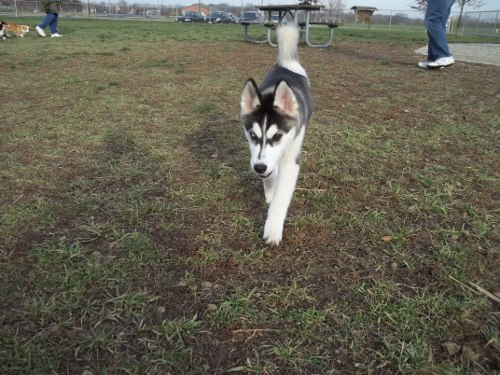 Dog Park Scrapbook! *Extreme Pic Heavy* *MORE pics!* Updated 11/16/12 New1