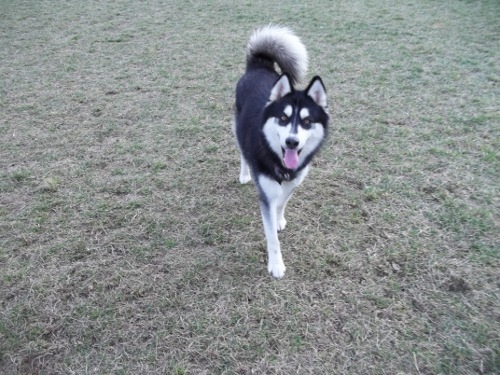 Dog Park Scrapbook! *Extreme Pic Heavy* *MORE pics!* Updated 11/16/12 New12