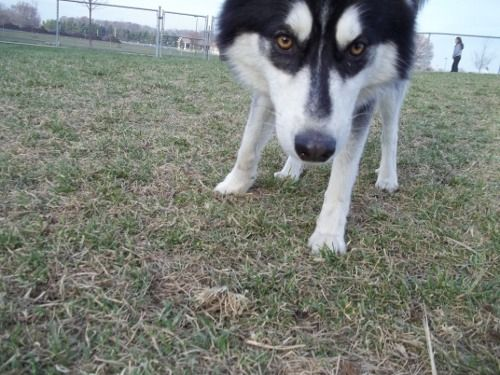 Dog Park Scrapbook! *Extreme Pic Heavy* *MORE pics!* Updated 11/16/12 New14-1