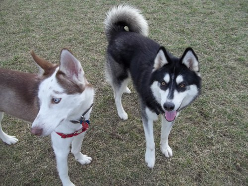 Dog Park Scrapbook! *Extreme Pic Heavy* *MORE pics!* Updated 11/16/12 New19