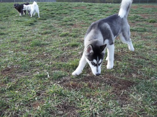 Dog Park Scrapbook! *Extreme Pic Heavy* *MORE pics!* Updated 11/16/12 New2