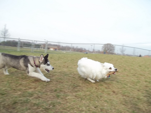 Dog Park Scrapbook! *Extreme Pic Heavy* *MORE pics!* Updated 11/16/12 New26