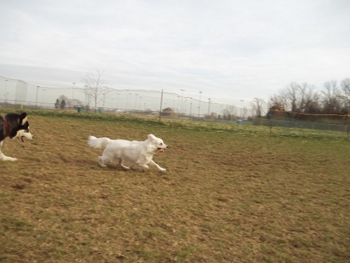 Dog Park Scrapbook! *Extreme Pic Heavy* *MORE pics!* Updated 11/16/12 New27