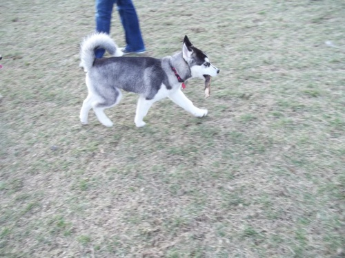 Dog Park Scrapbook! *Extreme Pic Heavy* *MORE pics!* Updated 11/16/12 New28