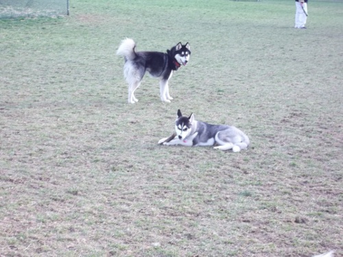 Dog Park Scrapbook! *Extreme Pic Heavy* *MORE pics!* Updated 11/16/12 New29