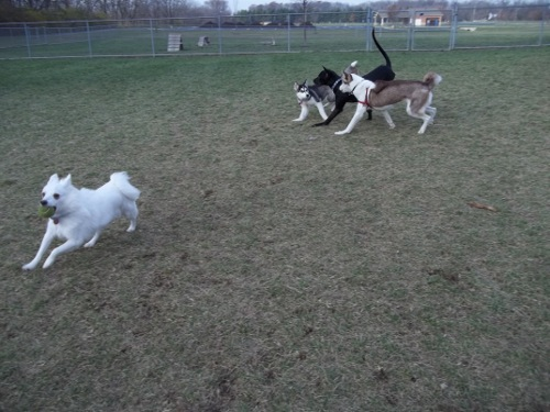 Dog Park Scrapbook! *Extreme Pic Heavy* *MORE pics!* Updated 11/16/12 New31