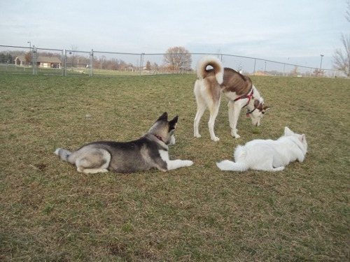 Dog Park Scrapbook! *Extreme Pic Heavy* *MORE pics!* Updated 11/16/12 New32