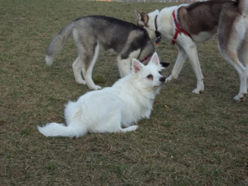 Dog Park Scrapbook! *Extreme Pic Heavy* *MORE pics!* Updated 11/16/12 New33