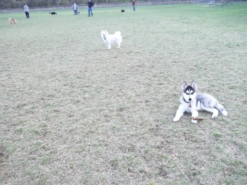 Dog Park Scrapbook! *Extreme Pic Heavy* *MORE pics!* Updated 11/16/12 New35