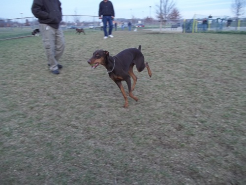 Dog Park Scrapbook! *Extreme Pic Heavy* *MORE pics!* Updated 11/16/12 New36