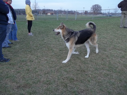 Dog Park Scrapbook! *Extreme Pic Heavy* *MORE pics!* Updated 11/16/12 New43