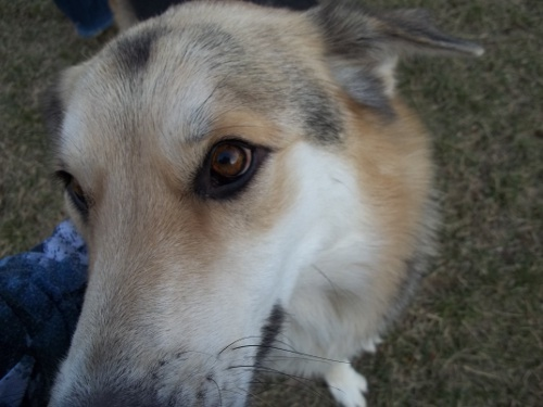Dog Park Scrapbook! *Extreme Pic Heavy* *MORE pics!* Updated 11/16/12 New44