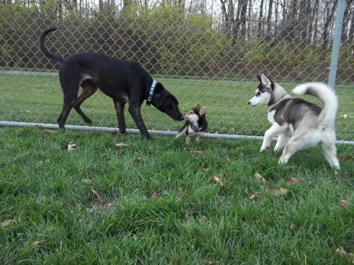 Dog Park Scrapbook! *Extreme Pic Heavy* *MORE pics!* Updated 11/16/12 New47