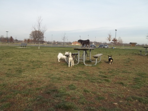 Dog Park Scrapbook! *Extreme Pic Heavy* *MORE pics!* Updated 11/16/12 New5