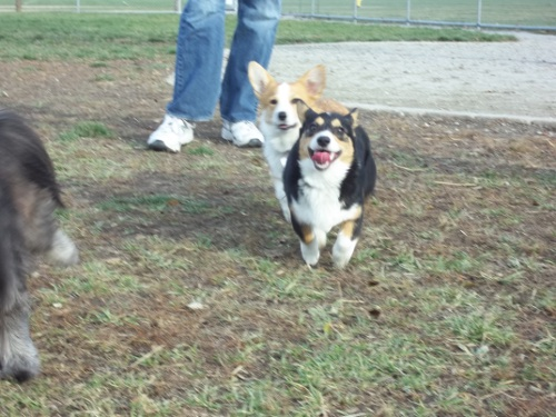 Dog Park Scrapbook! *Extreme Pic Heavy* *MORE pics!* Updated 11/16/12 New6