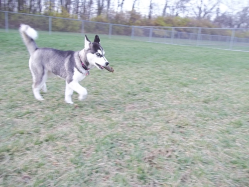 Dog Park Scrapbook! *Extreme Pic Heavy* *MORE pics!* Updated 11/16/12 New8