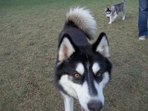 Dog Park Scrapbook! *Extreme Pic Heavy* *MORE pics!* Updated 11/16/12 New9