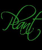 Arxcis Artemidoros Plant_Consular