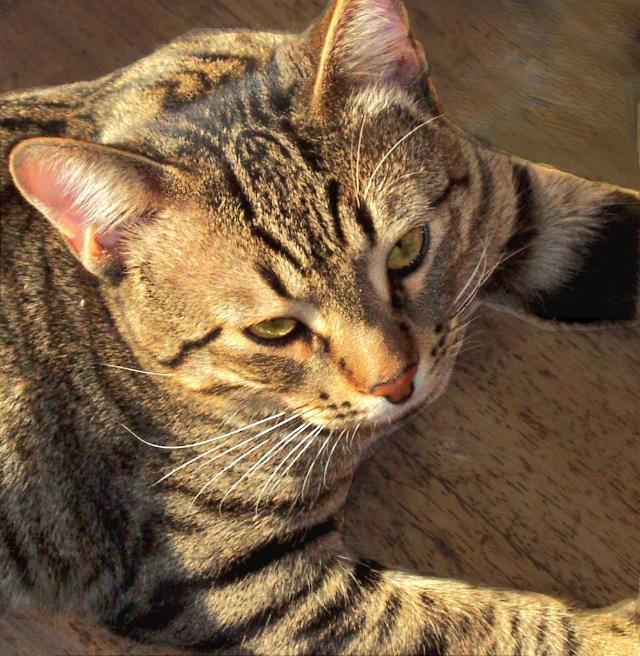 Πέθανε το γατάκι μου A3292e4e-b568-4b64-8886-cc6f8d3c4461_zpsqdiebvr3