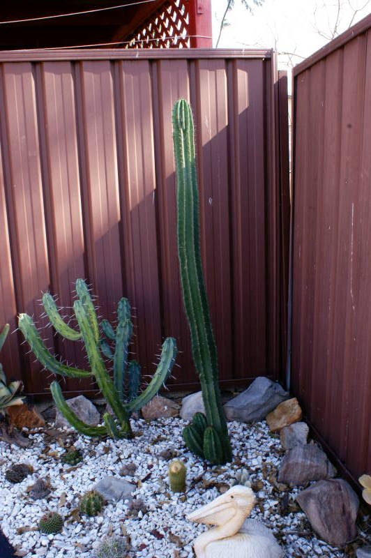 New temporary outdoors cactus garden DSC00129