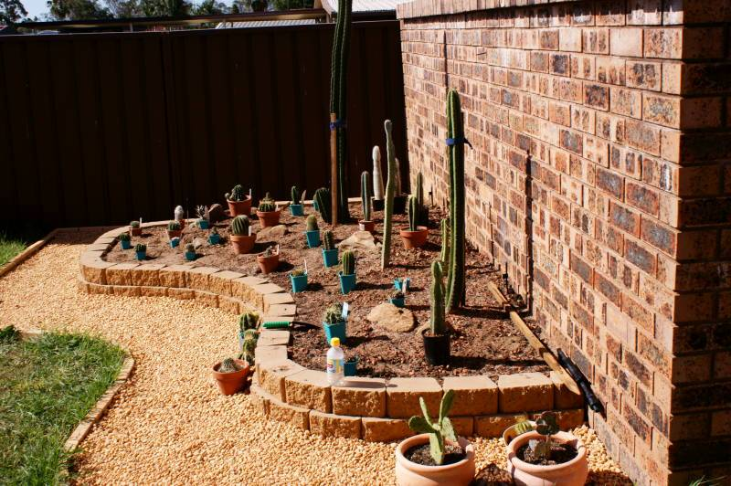 New temporary outdoors cactus garden - Page 2 DSC00162