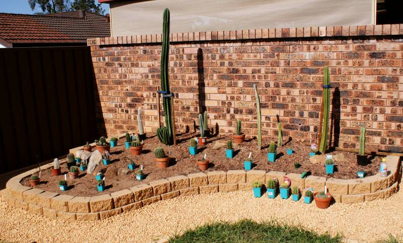 New temporary outdoors cactus garden - Page 2 DSC00163
