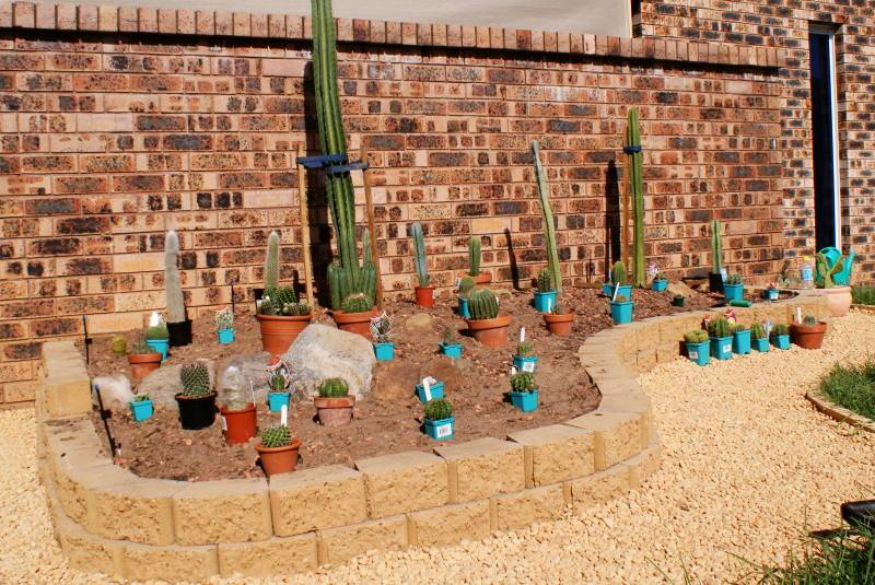 New temporary outdoors cactus garden - Page 2 DSC00164