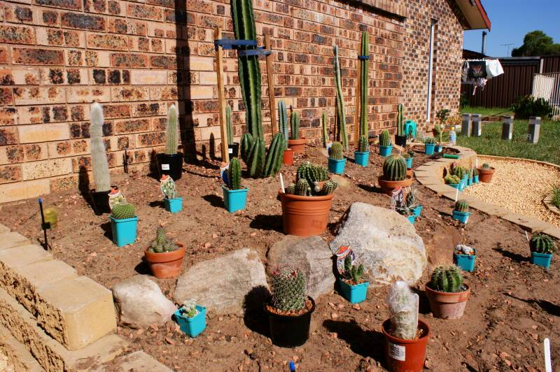 New temporary outdoors cactus garden - Page 2 DSC00165