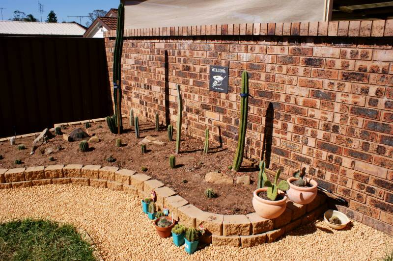New temporary outdoors cactus garden - Page 2 DSC00169-2