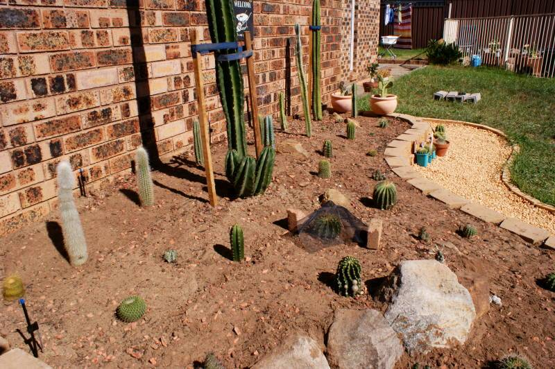 New temporary outdoors cactus garden - Page 2 DSC00172