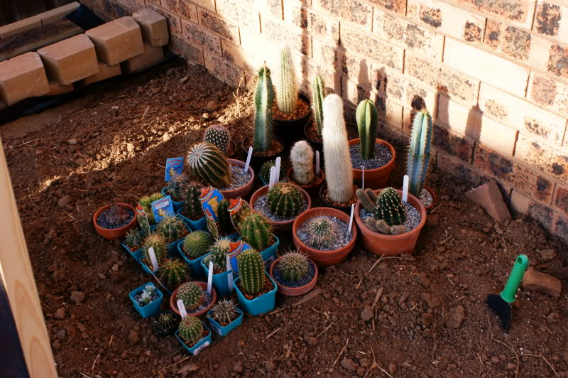 New temporary outdoors cactus garden DSC00261