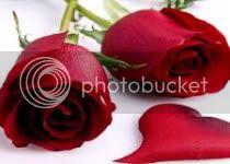 சேனையை அலங்கரிக்கும் பூக்கள் 02 - Page 4 High-definition-flowers-roses-red-flowers-red-rose_zps0741fe1c
