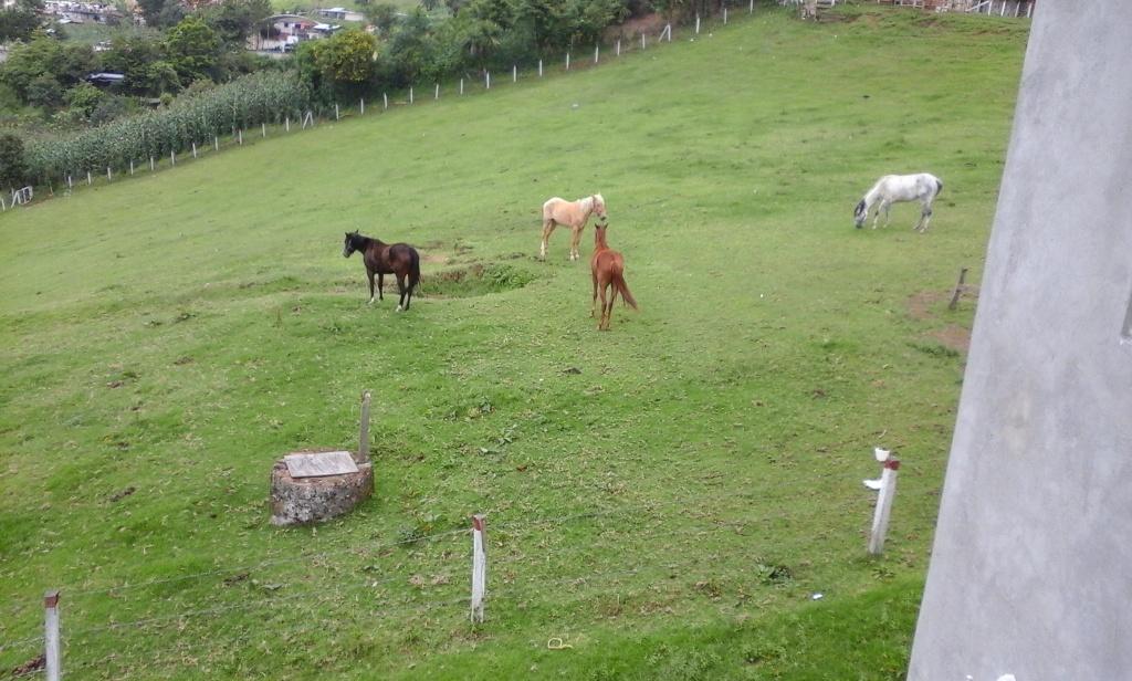 Los caballos y ponys de las montañas 20150608_122728