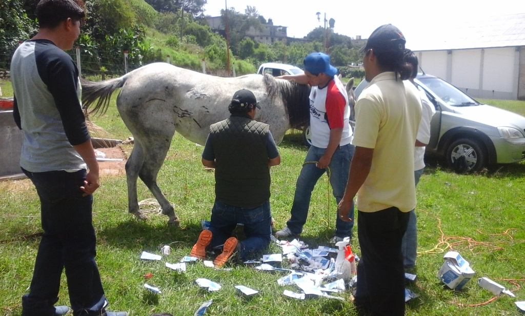 Los caballos y ponys de las montañas 20150622_114919