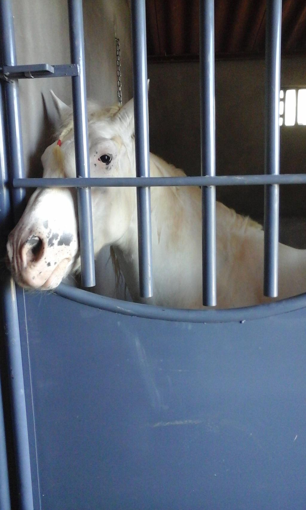 Los caballos y ponys de las montañas 20151112_110602