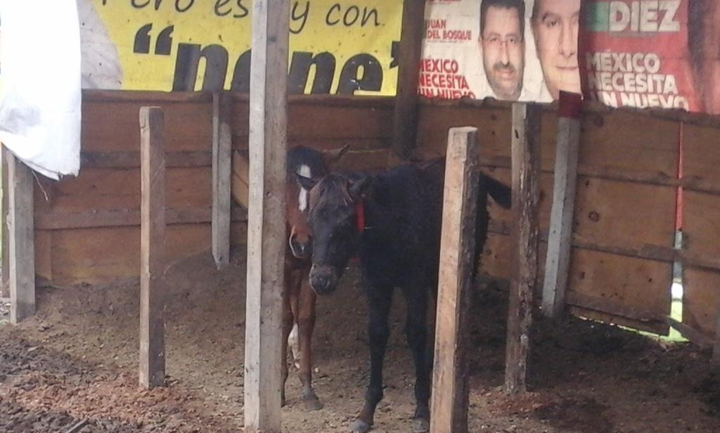 Los caballos y ponys de las montañas 20151119_120025