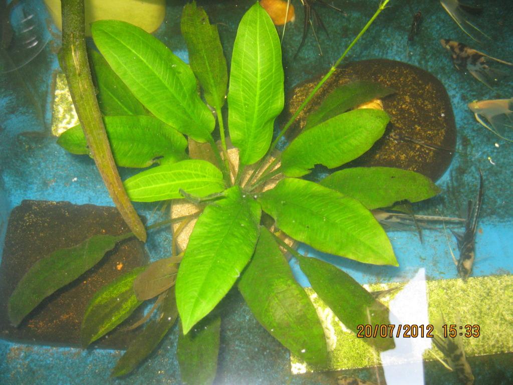 mis plantas IMG_5355
