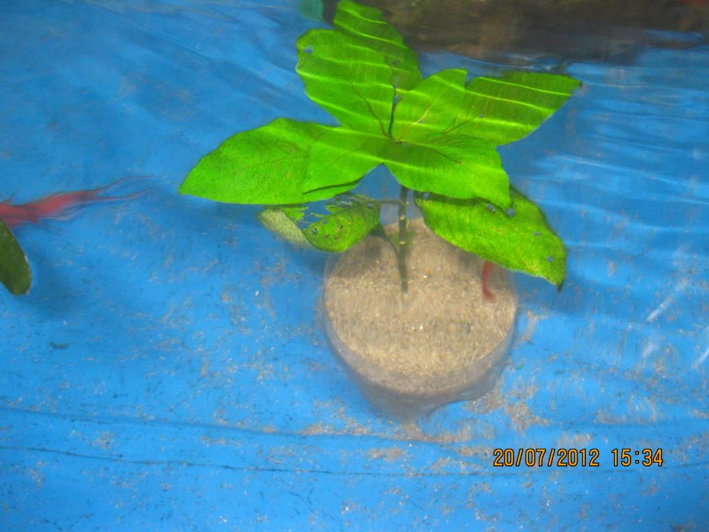 mis plantas IMG_5358