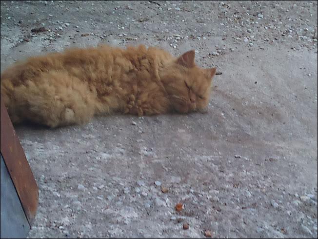 Ο πορτοκαλής Περσούλης των Σερρών, ψάχνει καινούργιο σπίτι....ΥΙΟΘΕΤΗΘΗΚΕ 2012-09-02193004