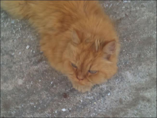 Ο πορτοκαλής Περσούλης των Σερρών, ψάχνει καινούργιο σπίτι....ΥΙΟΘΕΤΗΘΗΚΕ 2012-09-02193026