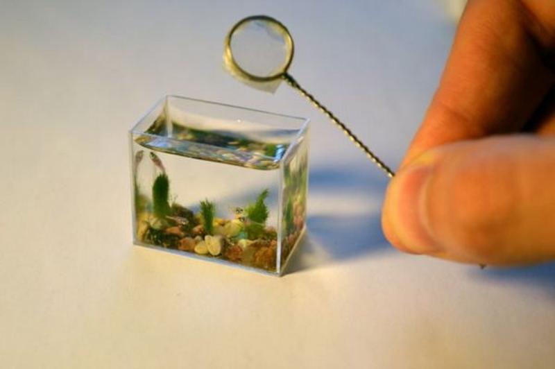 O menor aquário do mundo. 9350f528-83e7-422a-8f88-8025f831005c_zps1236cb26